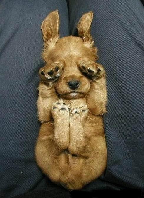 まんまる,お目め,可愛い,犬たち,画像011