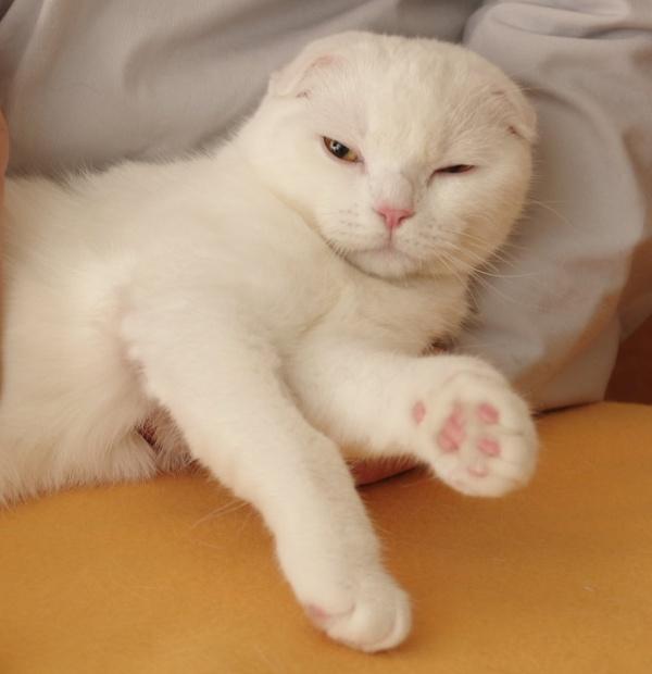 ぷにぷに,猫,肉球,画像011