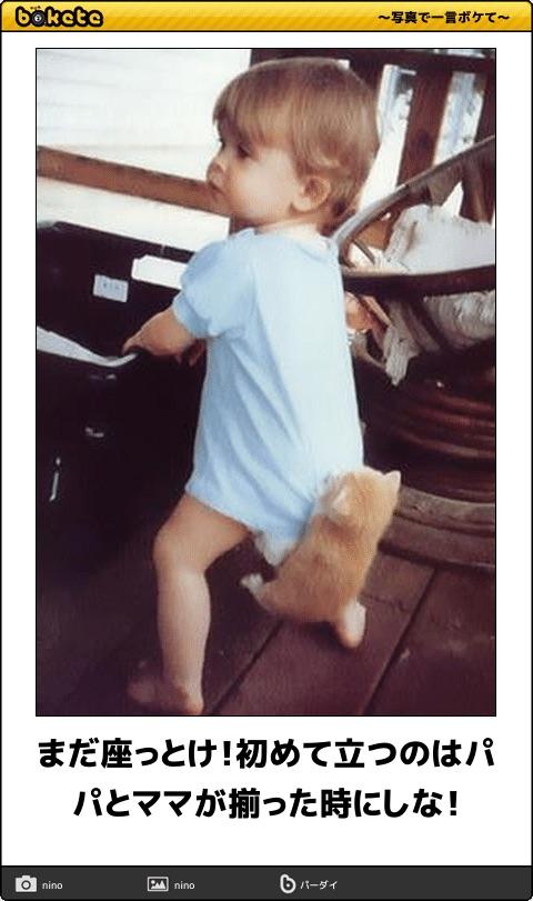 爆笑,可愛く,おもしろい,猫,bokete,画像012