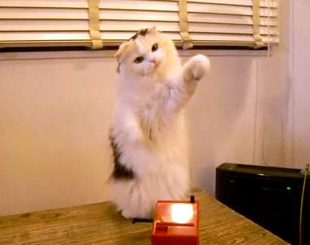 にやけちゃう,可愛い,猫パンチ,画像012