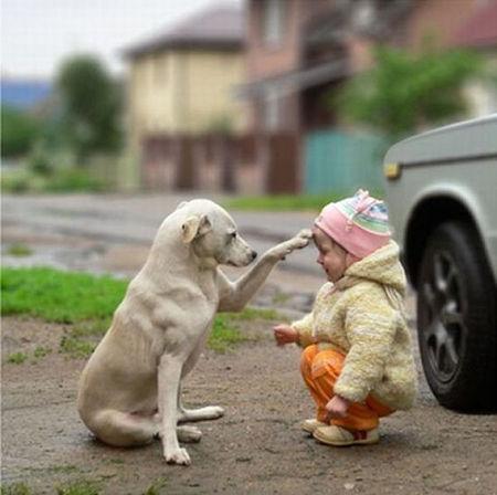 癒し,犬,画像犬012