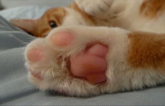ぷにぷに,猫,肉球,画像012