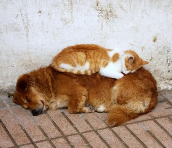 ニヤニヤ,犬,猫,画像013
