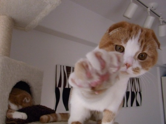 にやけちゃう,可愛い,猫パンチ,画像013