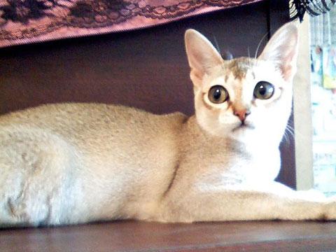 世界,色んな種類,猫,画像013