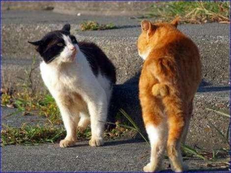 猫好き,フェチ,癒し,猫,ふぐり,画像013