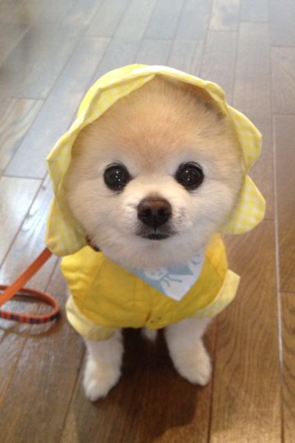 まんまる,お目め,可愛い,犬たち,画像013