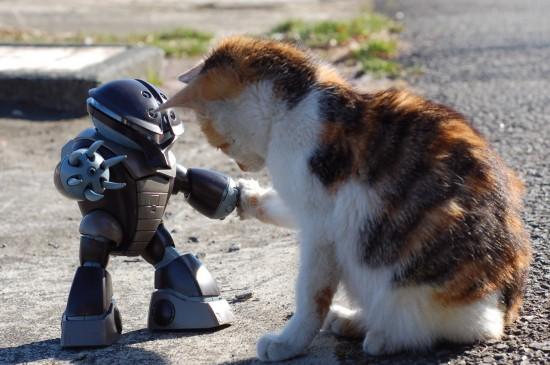 思わず,可愛い,笑った,猫,画像013