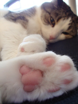 ぷにぷに,猫,肉球,画像013