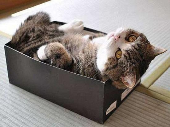 狭い所,大好き,猫,画像014