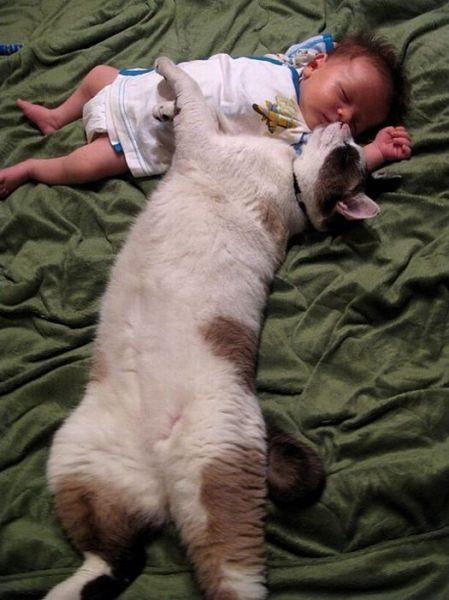 癒されたい,必見,赤ちゃん,猫,仲良し,画像014