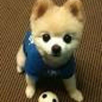 まんまる,お目め,可愛い,犬たち,画像014