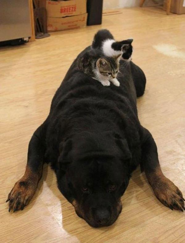 ニヤニヤ,犬,猫,画像014