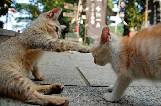 にやけちゃう,可愛い,猫パンチ,画像014