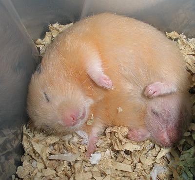 可愛さ,動物,おもしろ,寝相,画像015