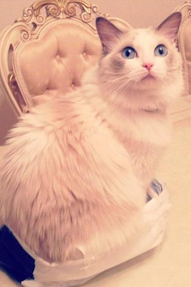 美しい,可愛い,美人飼い主,猫,画像015