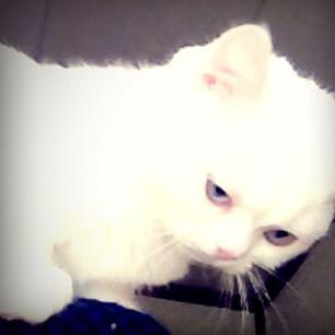 ツンギレ,最強,ジト目,猫,画像015