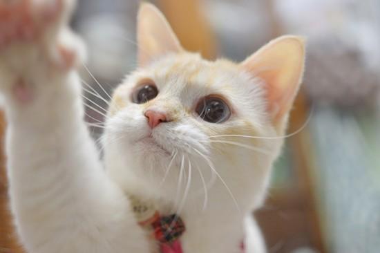 にやけちゃう,可愛い,猫パンチ,画像015