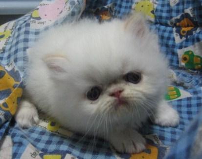 ぶちゃ,可愛い,鼻ぺちゃ,犬,猫,画像,ぶさ可愛い016