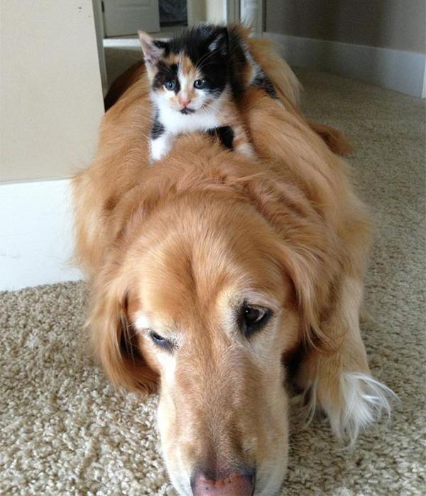 ニヤニヤ,犬,猫,画像016