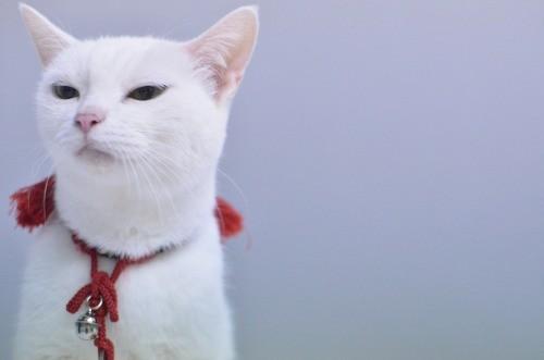 ツンギレ,最強,ジト目,猫,画像017