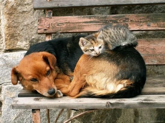 ニヤニヤ,犬,猫,画像017