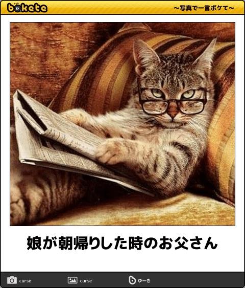 爆笑,可愛く,おもしろい,猫,bokete,画像018