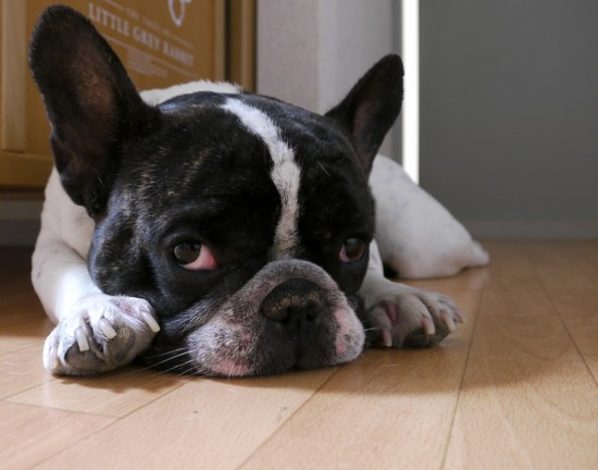 癒される,癒し犬,画像018