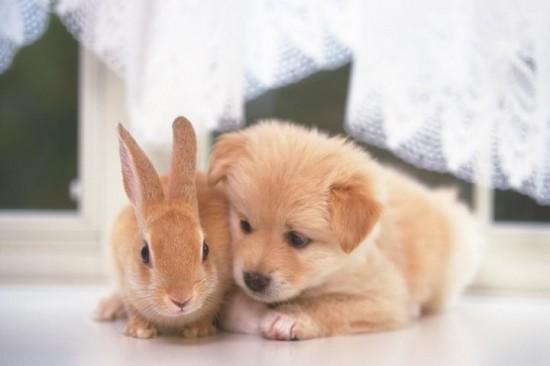 まんまる,お目め,可愛い,犬たち,画像018