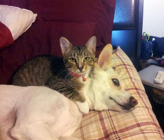 ニヤニヤ,犬,猫,画像018