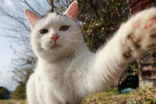 にやけちゃう,可愛い,猫パンチ,画像018
