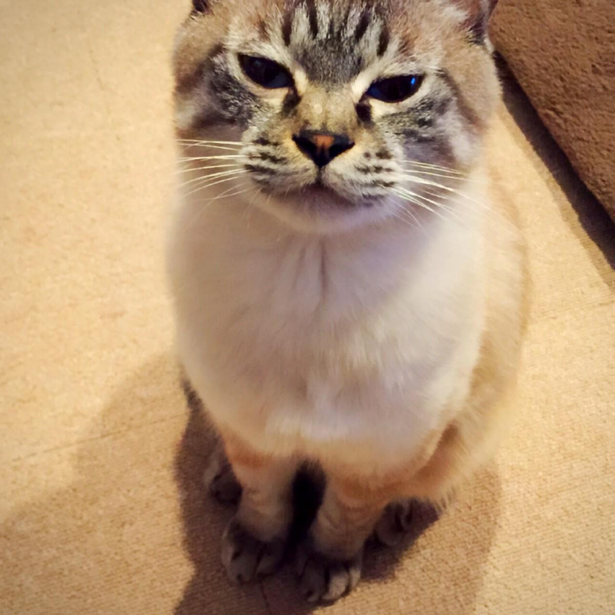ツンギレ,最強,ジト目,猫,画像019