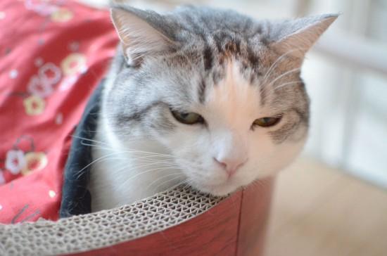 ツンギレ,最強,ジト目,猫,画像020