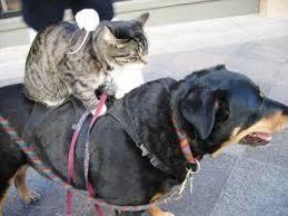 ニヤニヤ,犬,猫,画像020