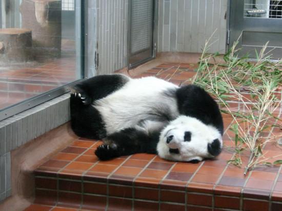 可愛さ,動物,おもしろ,寝相,画像021