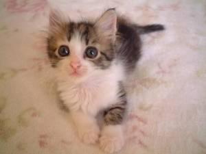 面白くて,可愛い,猫,画像022