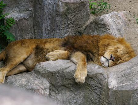 可愛さ,動物,おもしろ,寝相,画像023