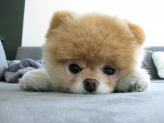 まんまる,お目め,可愛い,犬たち,画像023