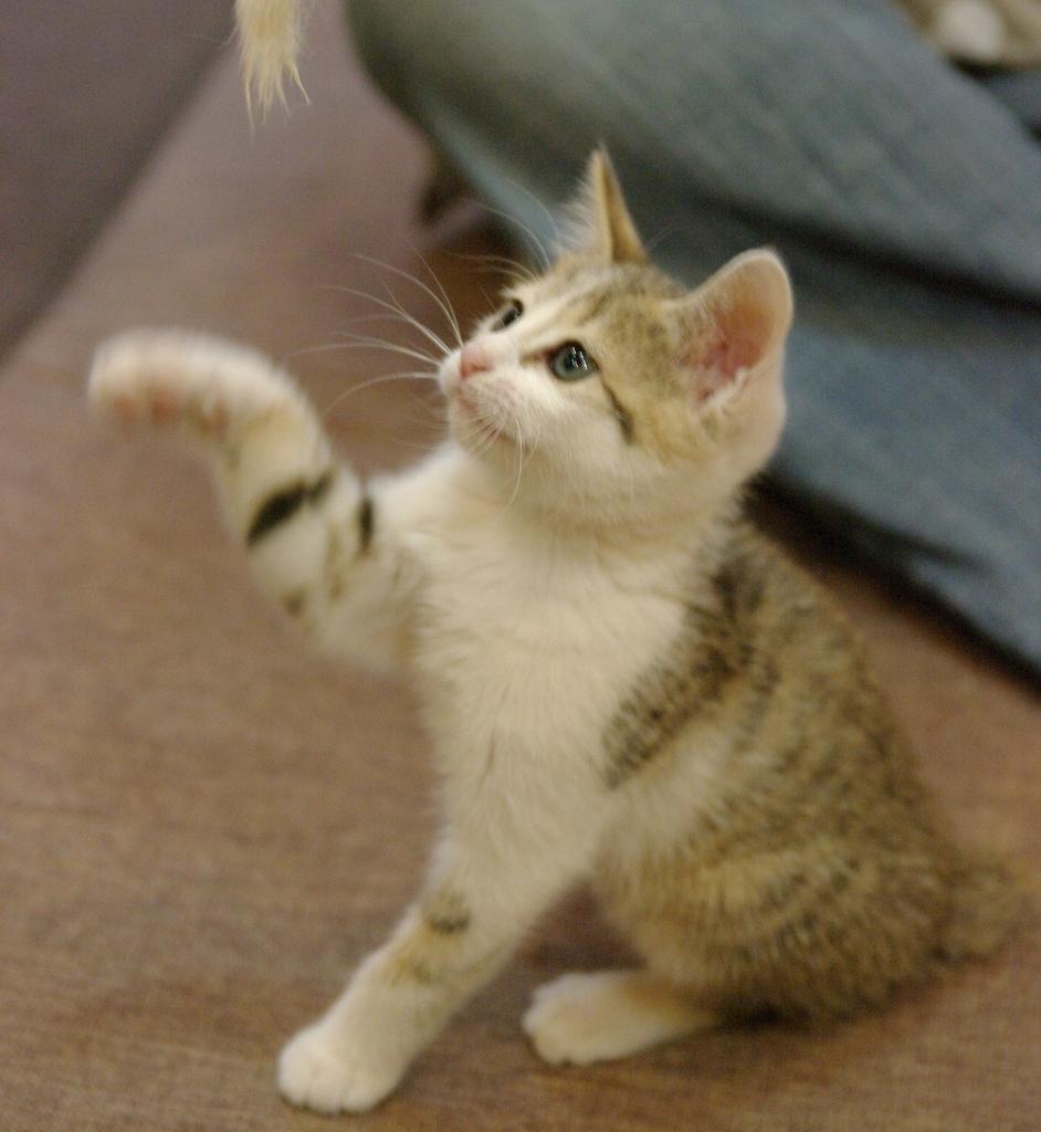 にやけちゃう,可愛い,猫パンチ,画像023