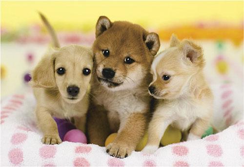 まんまる,お目め,可愛い,犬たち,画像024
