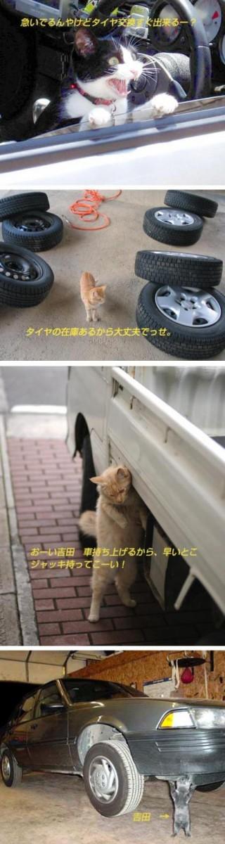 思わず,可愛い,笑った,猫,画像025