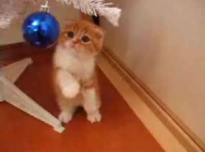 にやけちゃう,可愛い,猫パンチ,画像025