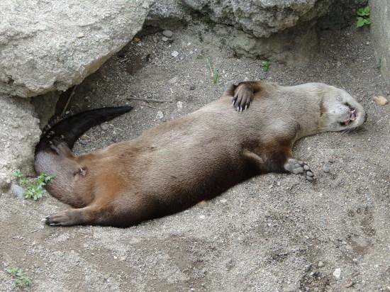 可愛さ,動物,おもしろ,寝相,画像026