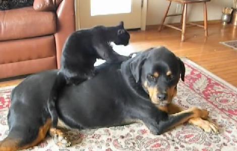 ニヤニヤ,犬,猫,画像026