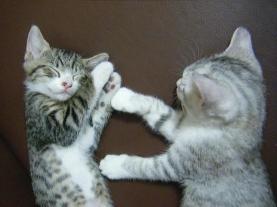 にやけちゃう,可愛い,猫パンチ,画像026