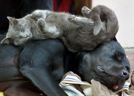 ニヤニヤ,犬,猫,画像027