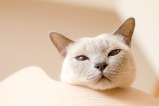 ツンギレ,最強,ジト目,猫,画像028