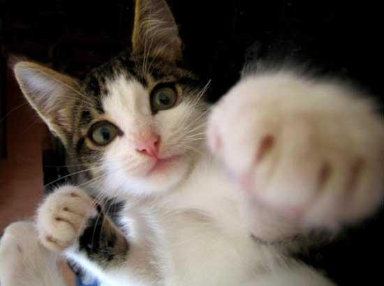 にやけちゃう,可愛い,猫パンチ,画像028