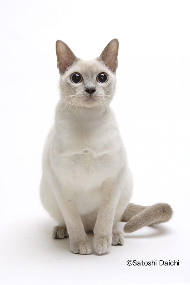 世界,色んな種類,猫,画像028