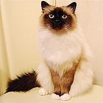 世界,色んな種類,猫,画像029